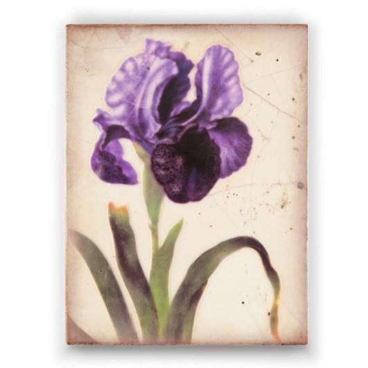 Sid Dickens Memory Block - Iris Royale