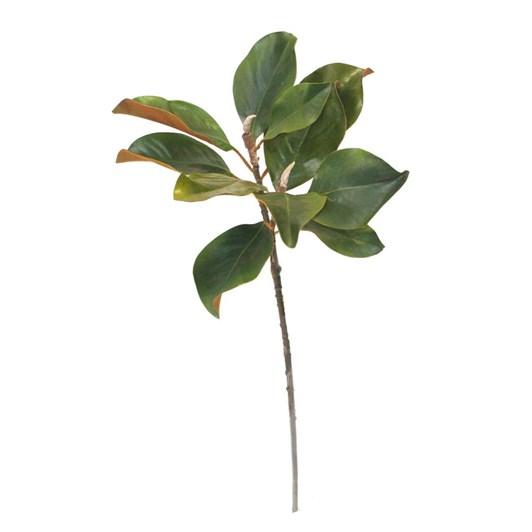 Magnolia Grandi Flora Branch