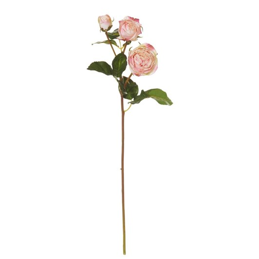 Albi Ecuadorian Rose Spray