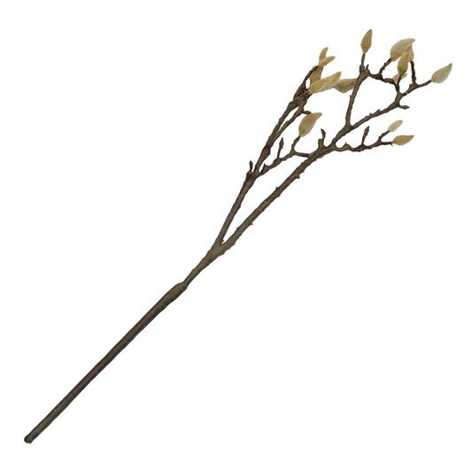 Early Magnolia Twig Medium Brown