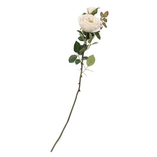 Large English Rose Cream