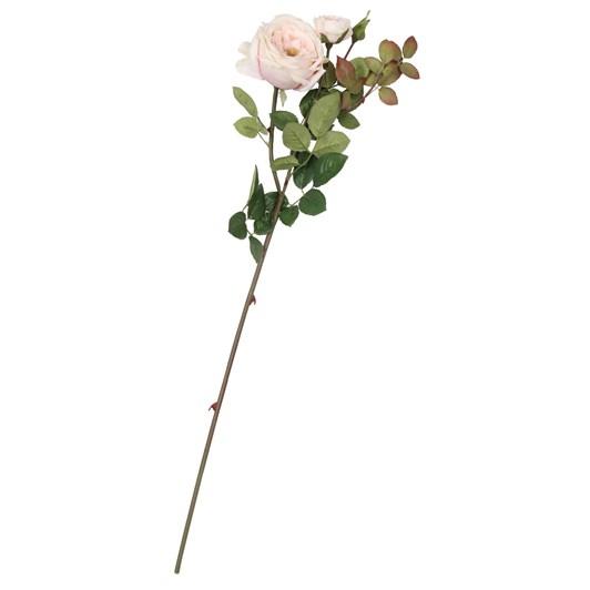 Large English Rose Blush Pink