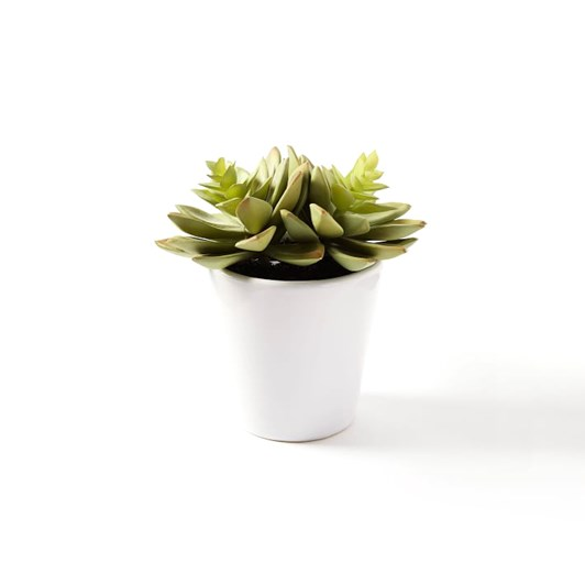 West Elm Faux Potted Succulent