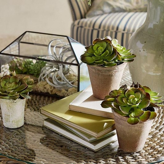 Pottery Barn Potted Succulents