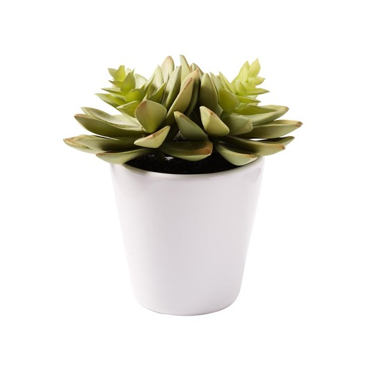 West Elm Faux Potted Succulent - Echeveria