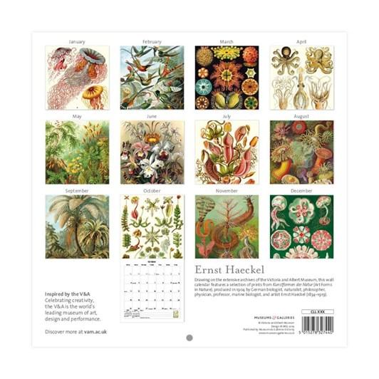 Museums & Galleries Ernest Haeckel 2020 Wall Calendar