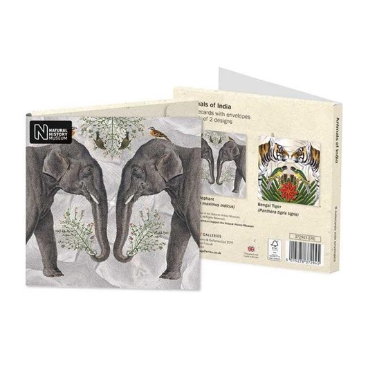 Museums & Galleries Animals Of India Notecard Set 4 X 2