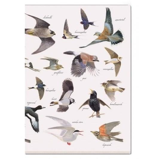 L-Folder Vogels Elwin Van Der Kolk Vogelbescherming Neder