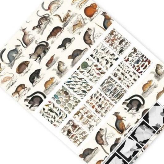 Vevoke Gift And Creative Papers Book-Fauna