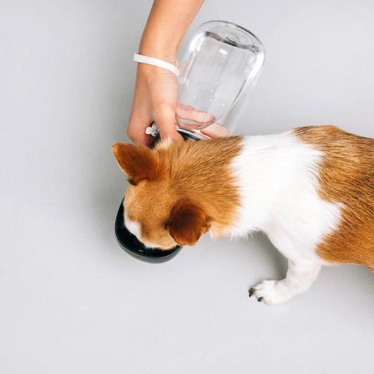 Original Thirsty Dog Smart Water Bottle 550ml