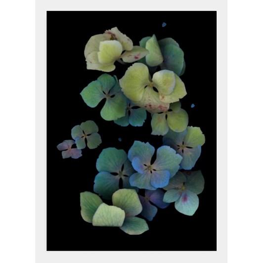 Poppy Card - Light Blue Hydrangea