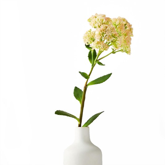West Elm Kalanchoe Stem