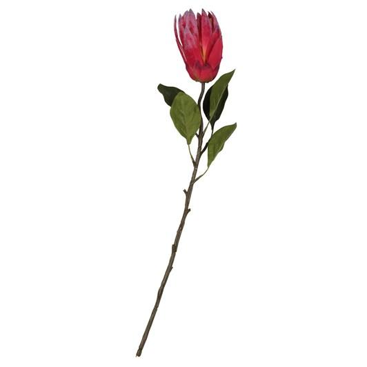 Garden Protea Medium Plum