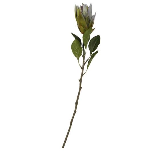 Garden Protea Medium Green