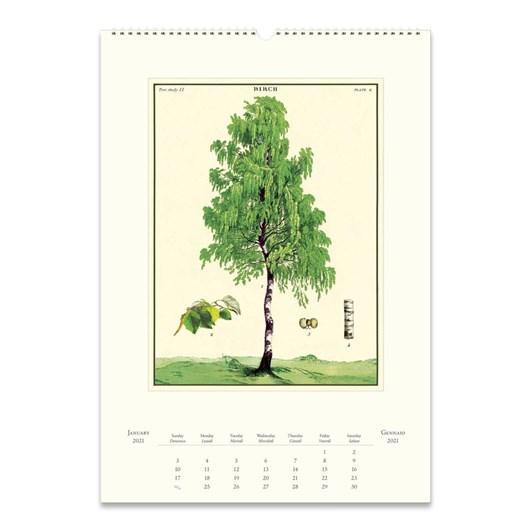 Cavallini Arboretum Wall Calendar