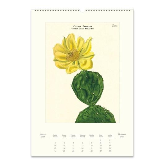 Cavallini Cacti & Succulents Wall Calendar