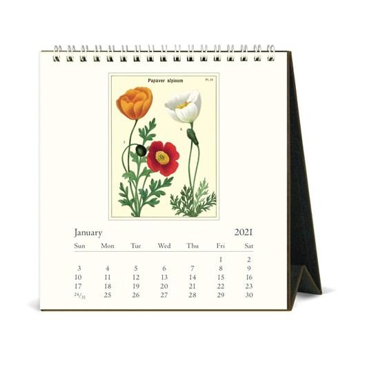 Cavallini Wildflowers 2021 Desk Calendar