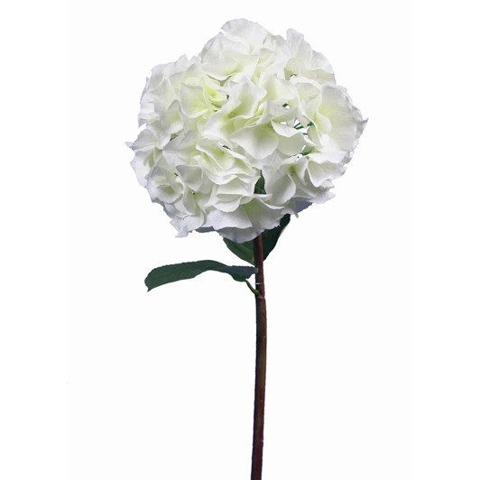 Large Petal Hydrangea Grand