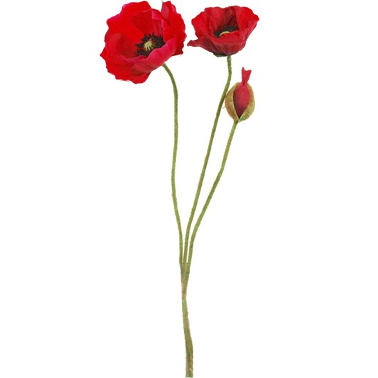 Provence Poppy