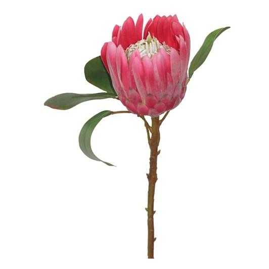 Giant Protea