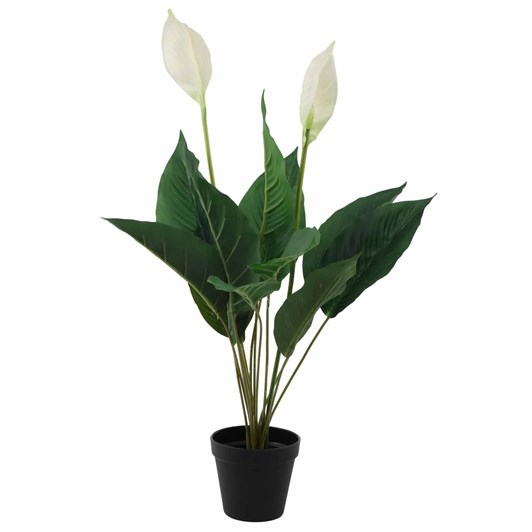 Peace Lily Potted Small