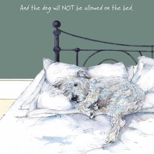 Little Dog Laughed Not Bed Card