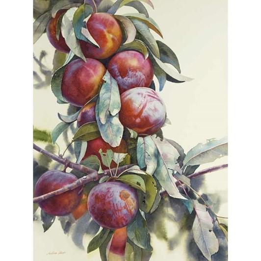 Plums In Black Contemporary Frame 60x45cm