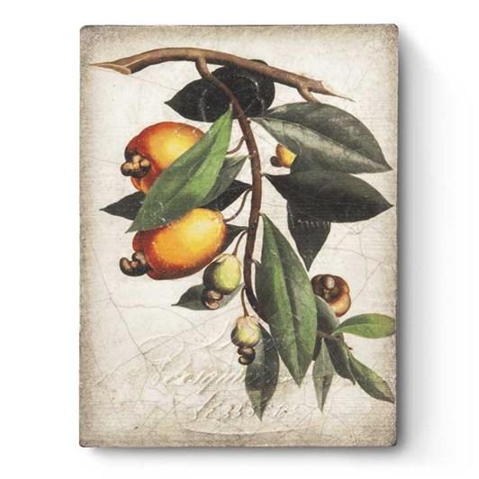 Sid Dickens Memory Block - Cashew Apple