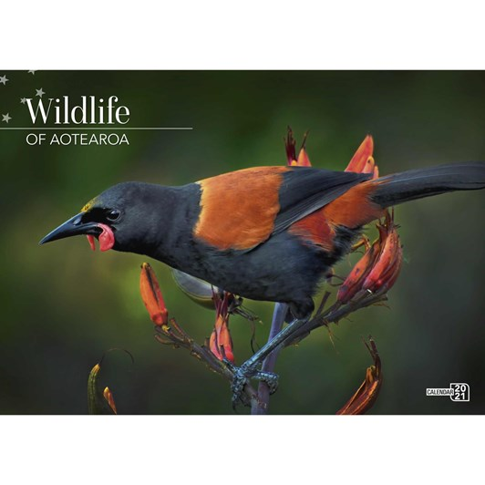 New Zealand Wildlife Calendar 2021 340X242Mm