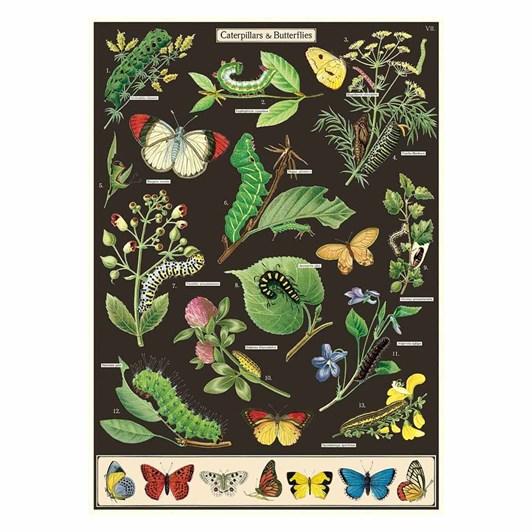 Cavallini Caterpillars & Butterflies Wrap