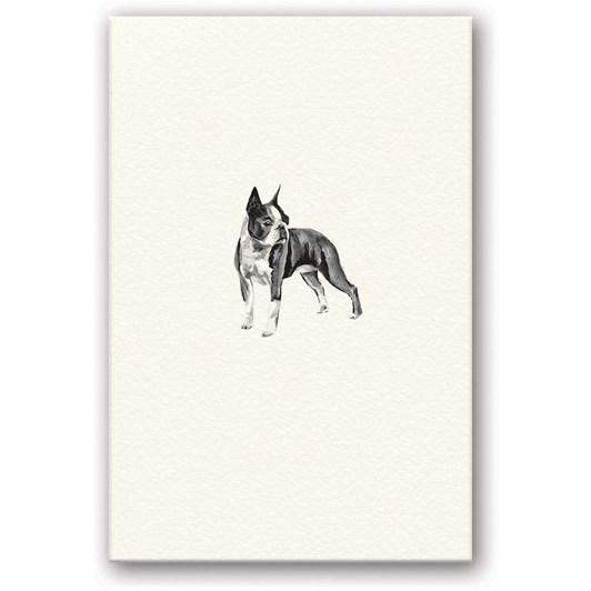Boston Terrier Embossed Card