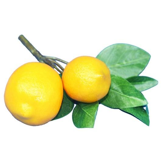 Lemon x2 Fruit