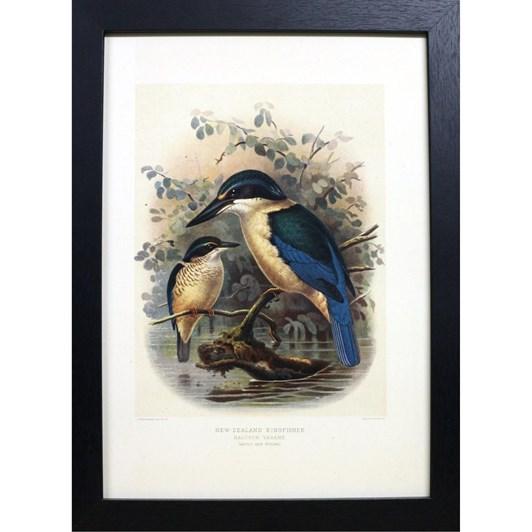 Artearoa Framed Bullers Kingfisher