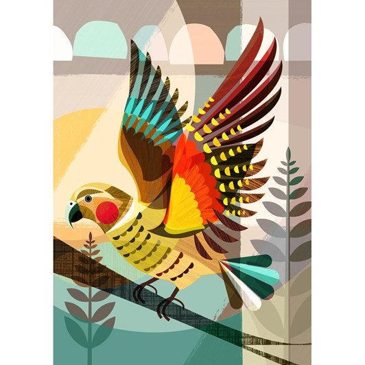 New Zealand Native Kea Euro Box Frame 40x28.5cm
