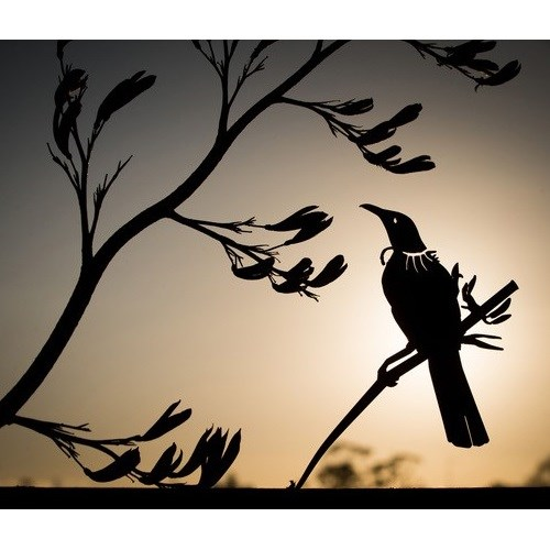 Metalbird NZ Tui