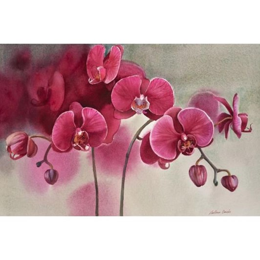 Svetlana Orinko Red Orchids In White Contemporary Frame 4x26.5cm