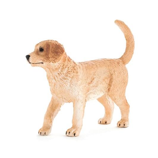 Mojo Golden Retriever Puppy