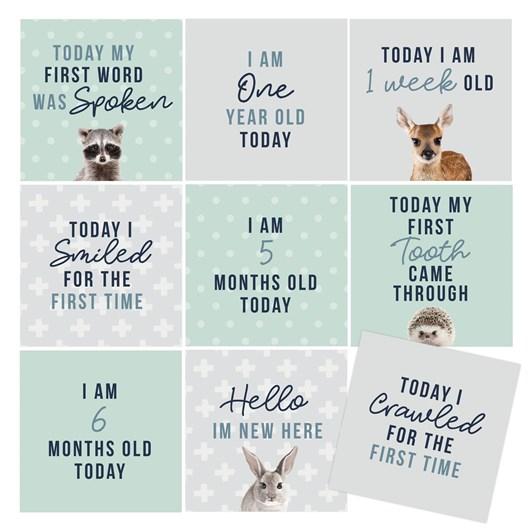 Splosh Baby Milestone Cards