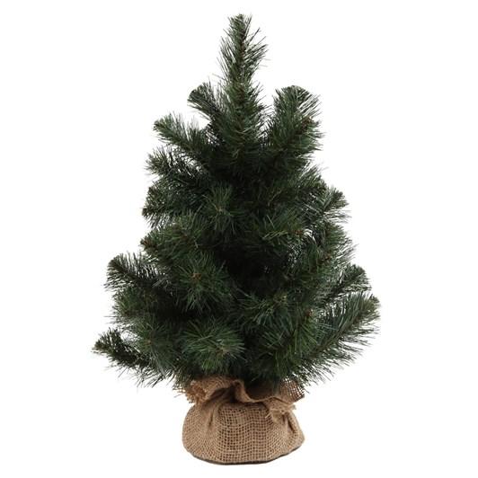 Australian Pine Tree 18 Inch With Burlap