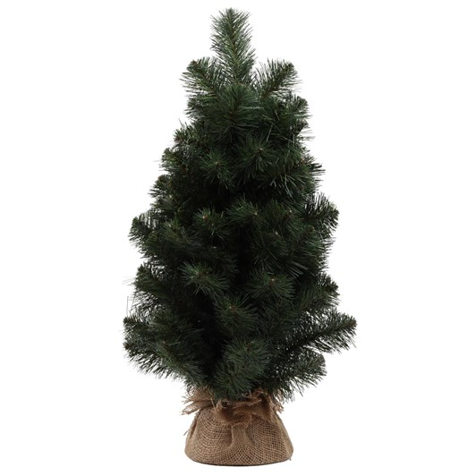 Australian Pine Tree 24 Inch with Burlap
