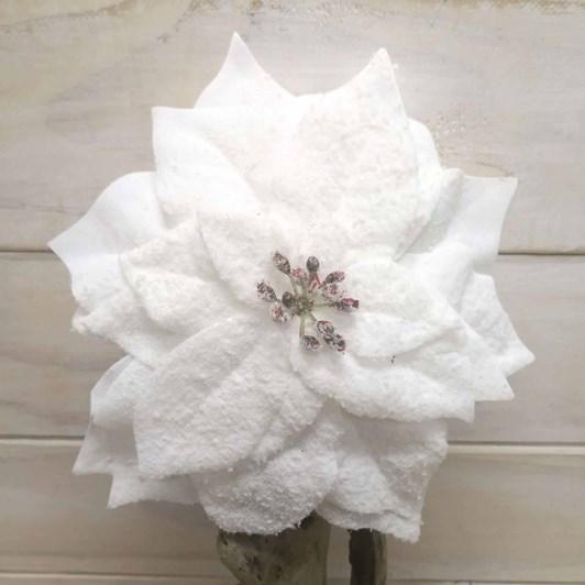 White Poinsettia With Snow Powder